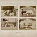 Warszawa. Prezentacja zwierząt nagrodzonych na Wystawie Przemysłowo-Rolniczej, 1874
