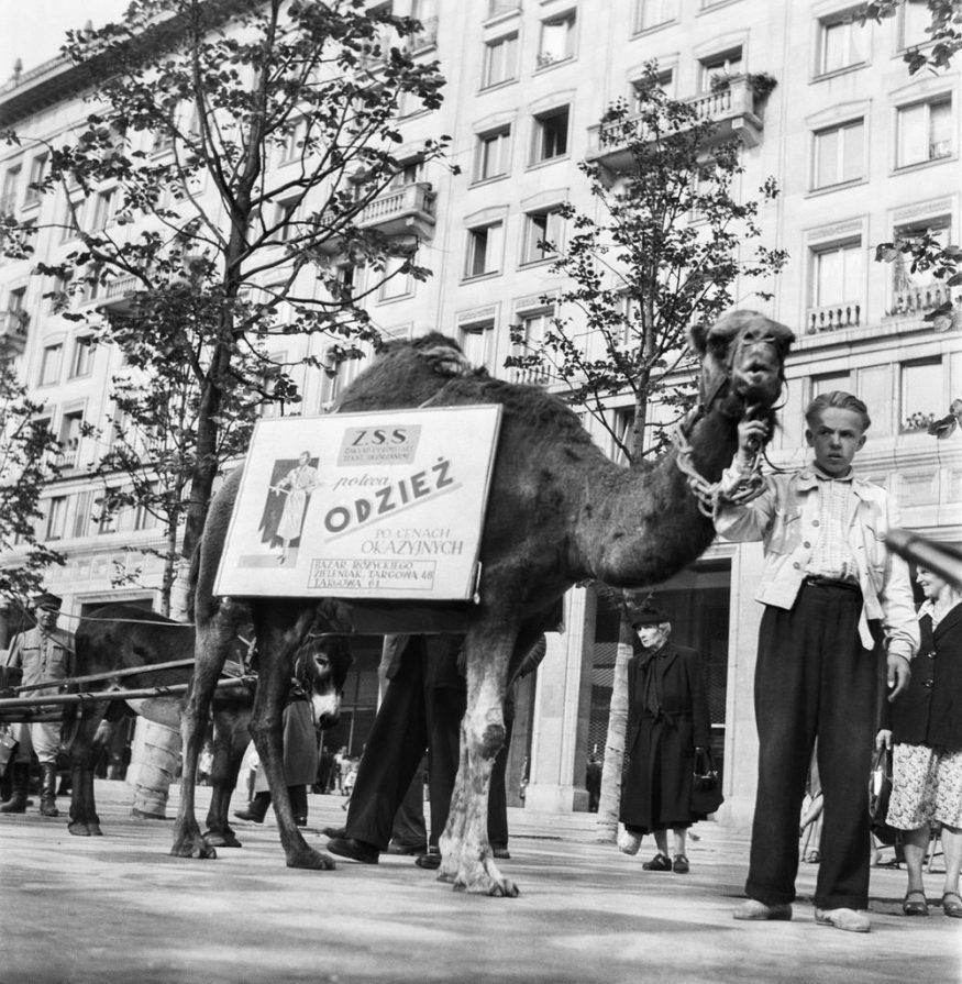 08.1954. Warszawa. CAF - Miedza